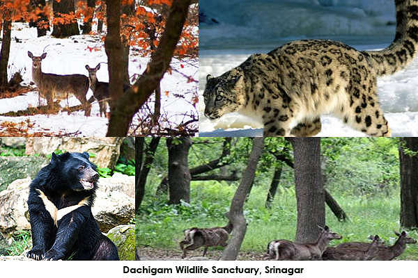 Dachigam Wildlife Sanctuary, Srinagar, Jammu and Kashmir