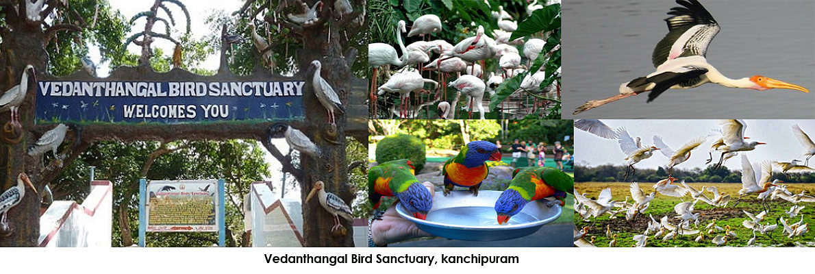 Vendanthangal is one of those sanctuaries that is situated close to Chennai and is certainly a bird watchers paradise especially for beginners.